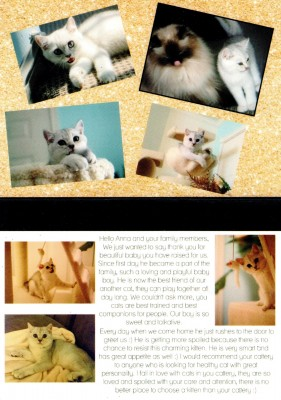 Cattery-Postcard-04.jpeg